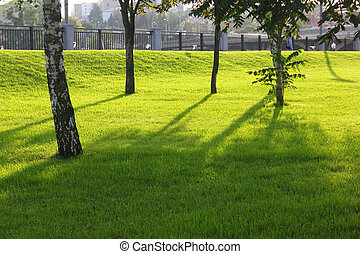 Trees and green grass lit by the sun.