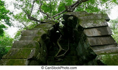 Trees and green moss on rocks - A medium shot of rocks with...