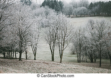 trees and hill covered with frost