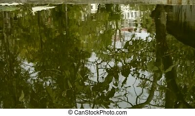 Trees and house reflected in pool