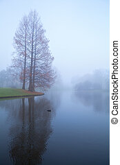 trees and lake in fog