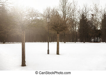 Trees and lantern in park in winter