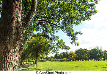 Trees and lawn in green park