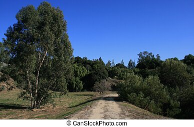 Coyote Hills Tree Park - Trees and meadow, West Coyote Hills...