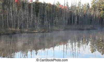 Trees and mist on the lake - Dead trees before forest and...