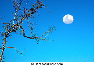 Trees and moon with blue sky.