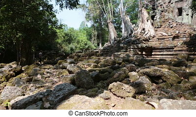 Trees and ruins of the temple, Siem Reap, Cambodia - Trees...