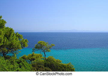forest on the coast with blue sea