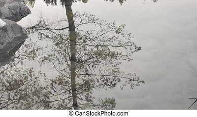 trees and sky abstract reflection in puddle in winter...