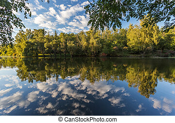 Trees and sky reflected on the surface of a pond. Nature photography