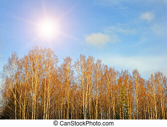 Trees and the sky in sunny autumn