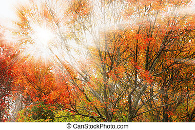 Trees and sunlight - Bright sunlight rays through the trees