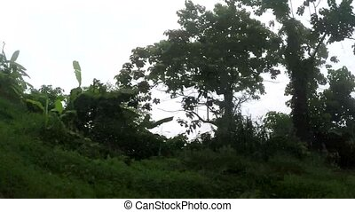 Trees and vegetation along narrow winding rugged in mountainous Province. Vehicle tracking shot