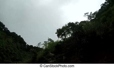 Trees and vegetation along narrow winding rugged in...