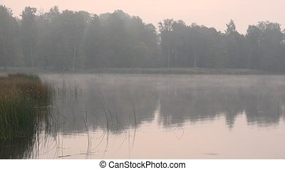 Trees and water plants near pond lake on foggy early autumn morning. 4K