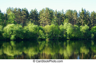 Tree`s and water