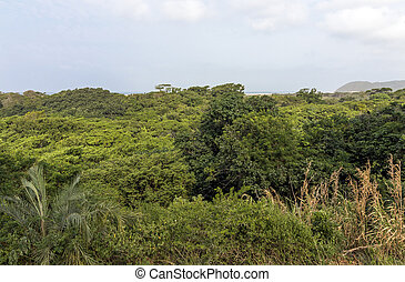 Trees and Wetland Vegetation and the Saint Lucia Estuary -...