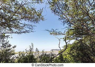 Trees and Wetland Vegetation at the Saint Lucia Estuary -...