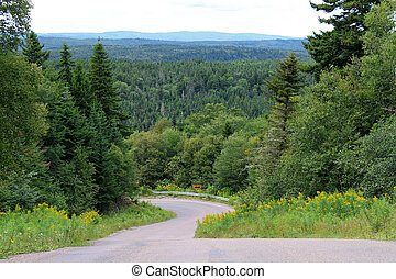 Trees and winding road - Winding Road with trees in the...
