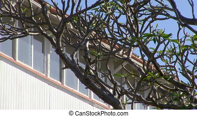 Trees and windows of a building - A medium shot of a window...