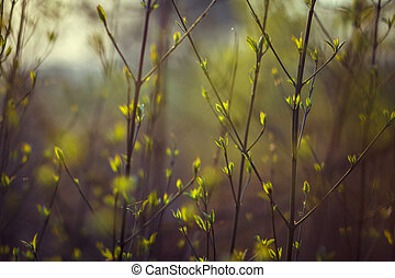 trees are blooming in the spring. branches of a tree with small green leaves. background light green. front view