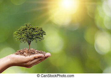 Trees are planted on the ground in human hands with natural green backgrounds, the concept of plant growth and environmental protection.