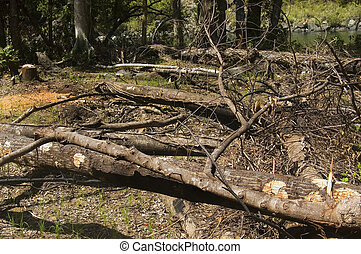 Trees are slashed and burned to give way to farming