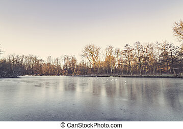 Trees around a frozen lake in the winter