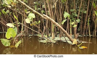 Trees At Amazon River - Amazon River, Southamerica