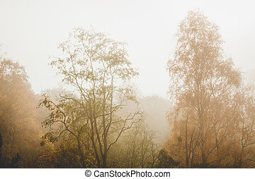 Trees at autumn yellow leaves and fog nature background