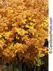 trees at fall