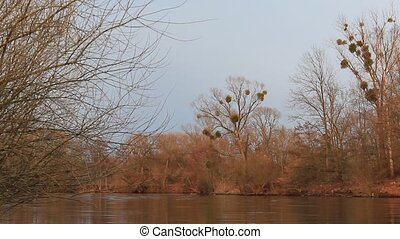 Trees at lake in autumn