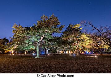 trees at night and blue dark night sky with many stars