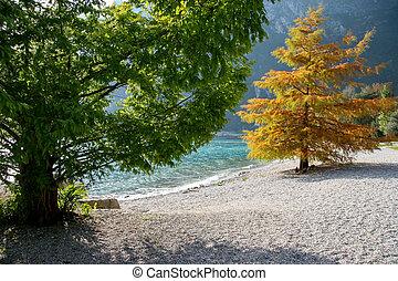 Trees at Riva Del Garda on the shore of Lake Garda