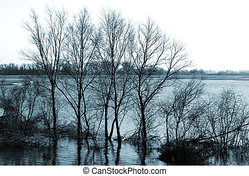 Trees at the riverbank