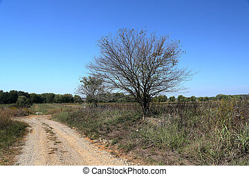 Trees at the side of a lonely gravel road