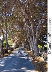 trees avenue