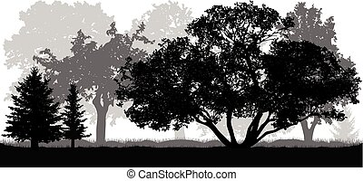 Trees background, nature, park (forest), silhouettes