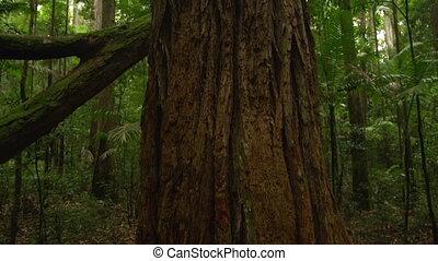 Trees bark and jungle - A medium shot of a tree's bark....