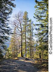 Trees Bavaria Alps