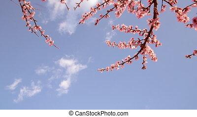 trees., blooming