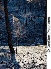 Trees burned and ashes on the ground after forest fire.