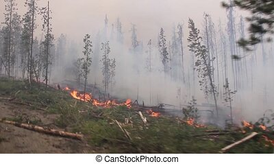 Trees burning in large forest fire with heavy smoke