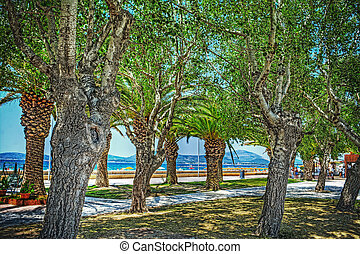 trees by Alghero seafront in hdr tone