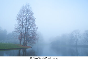 trees by lake in fog during autumn