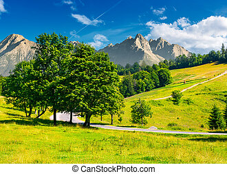 trees by the road in High Tatra mountains. composite image...