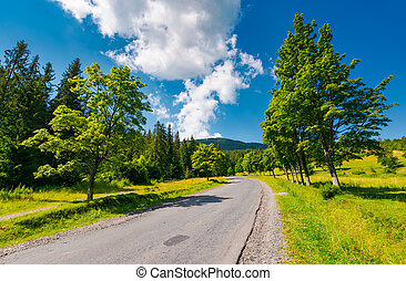 trees by the road in mountains