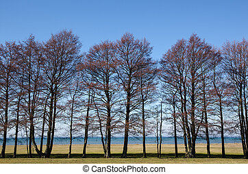 Trees by the waterfront view