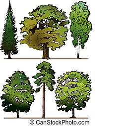 Trees. - Set of different trees on a white background....