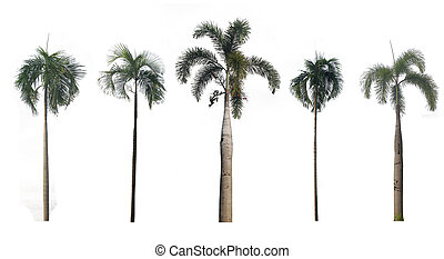 Trees Collection on white background, Isolated Trees